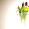 Tulips in vase – High Key lighting