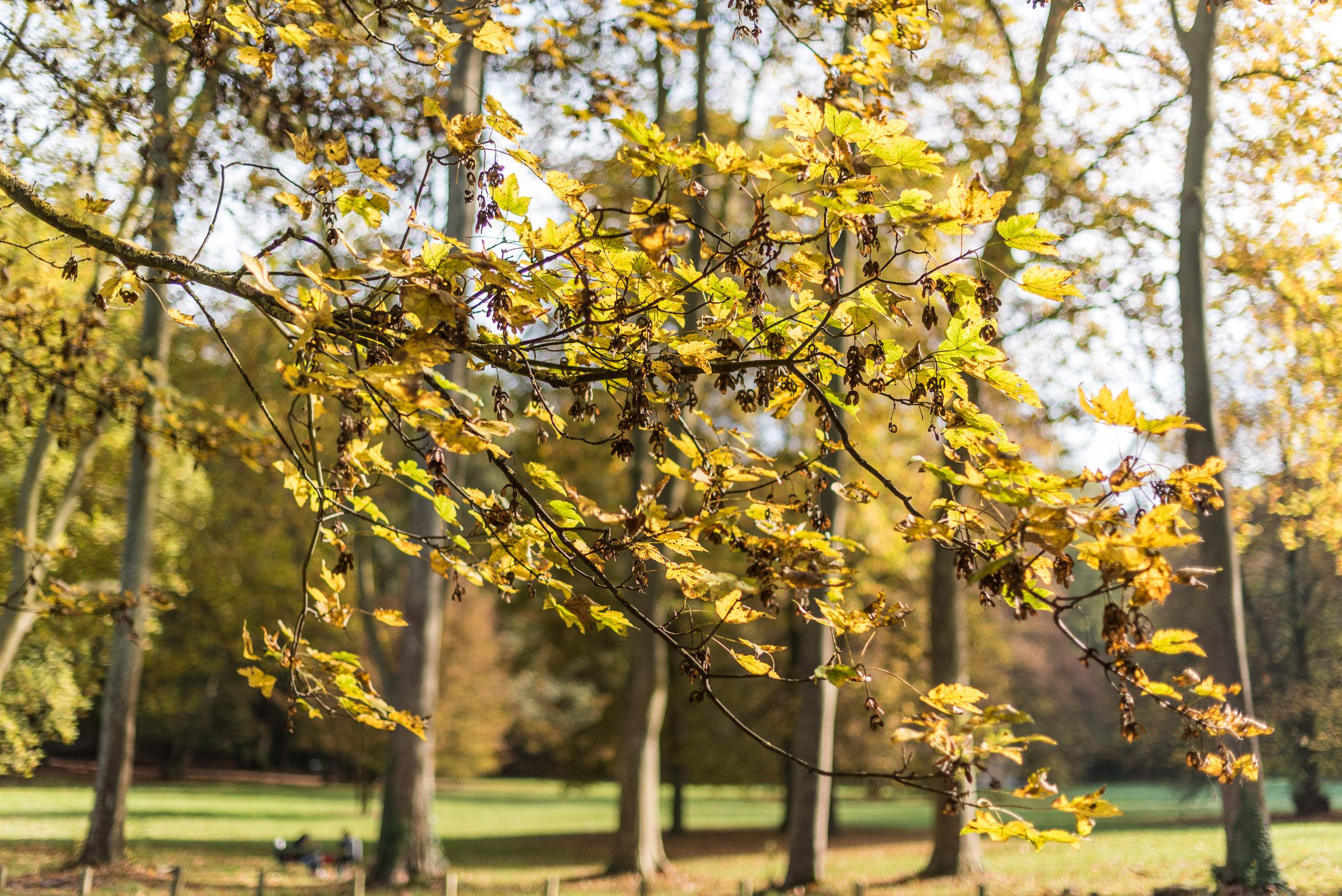 branche d'arbre en automne