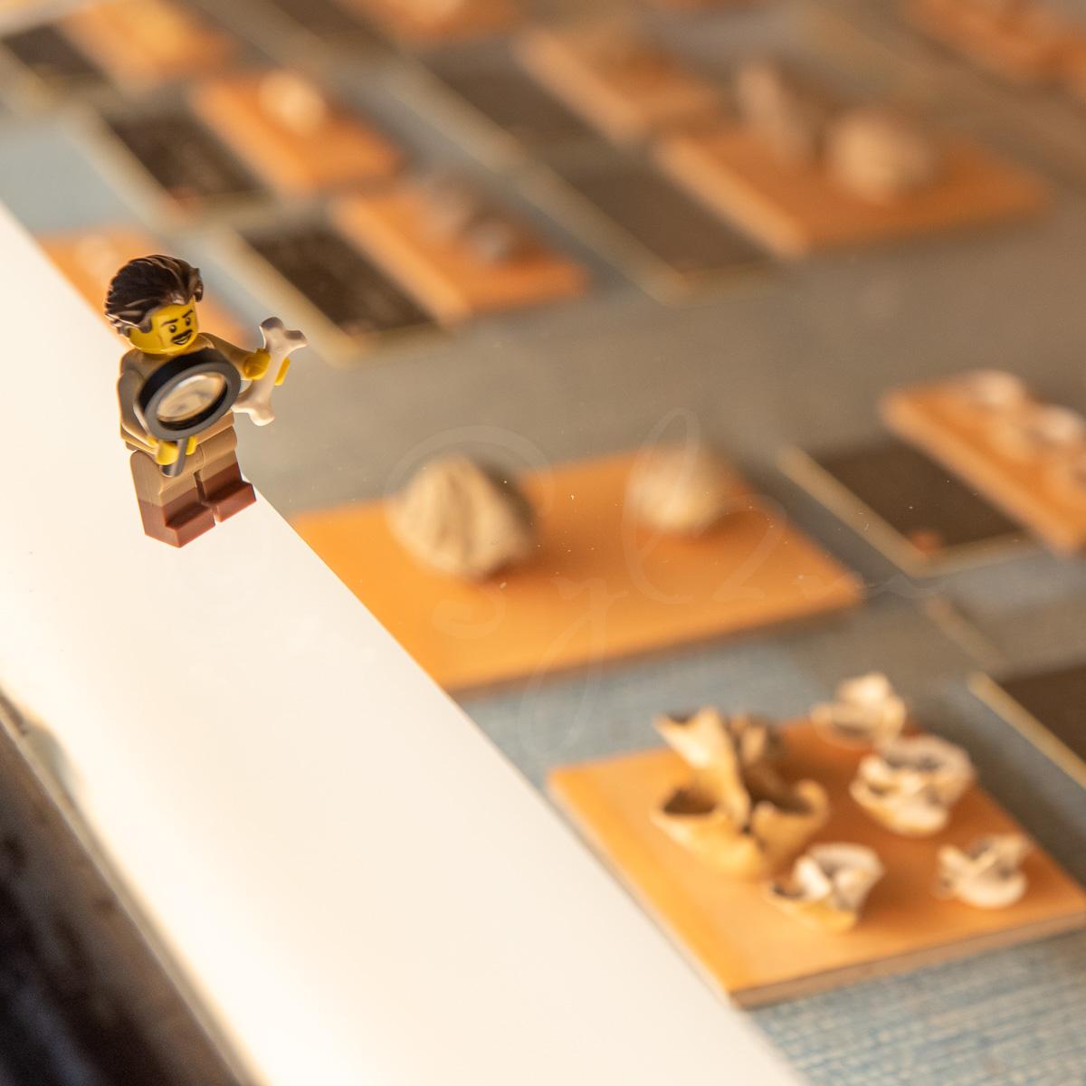 Lego Paléontologue