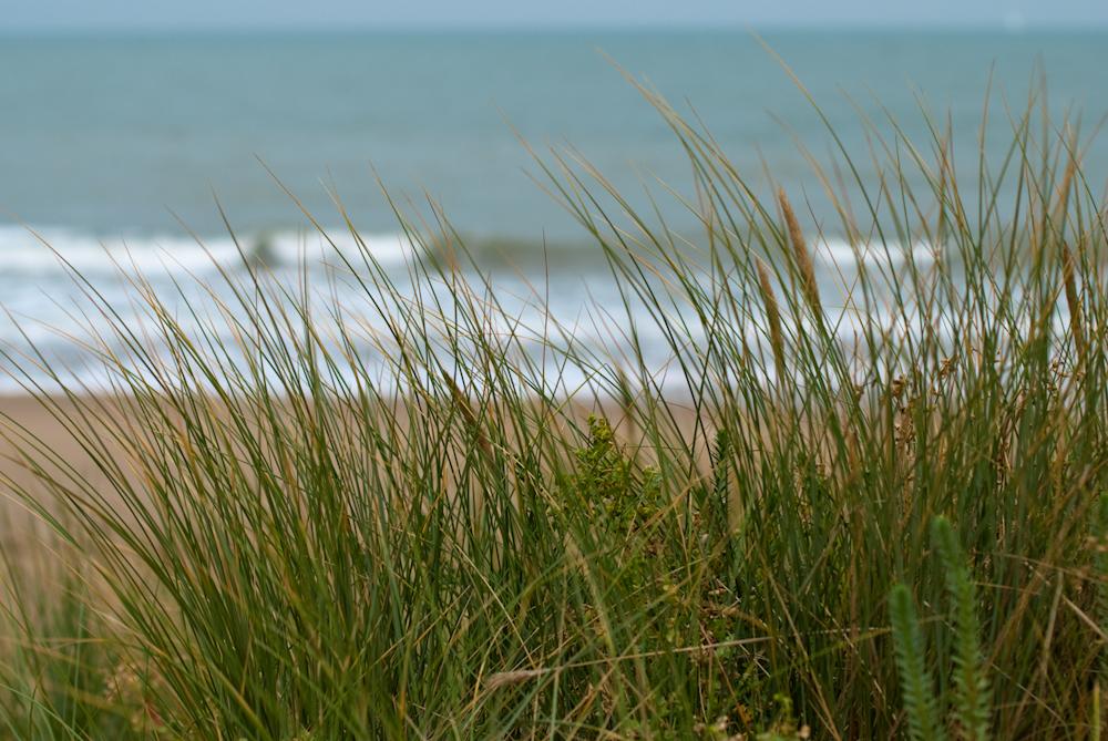 Les herbes et la mer
