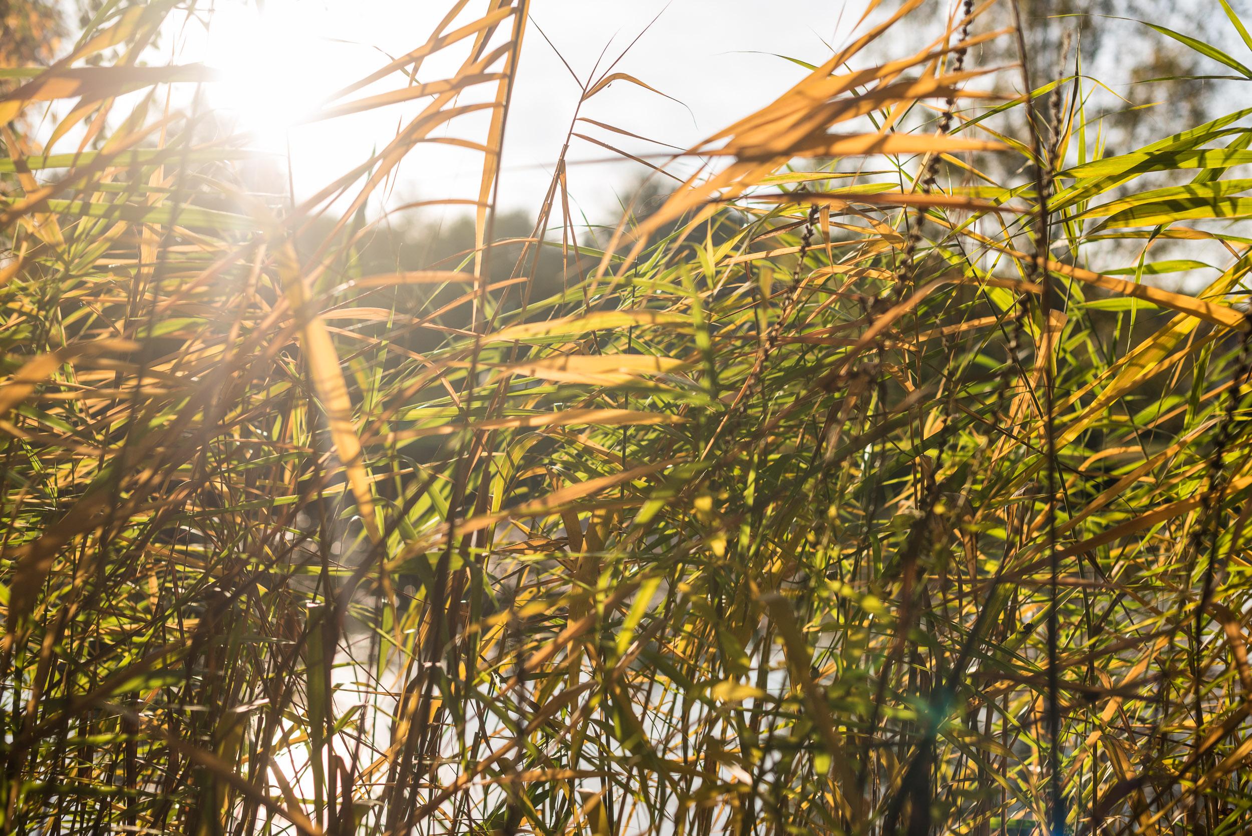 Les herbes et le soleil